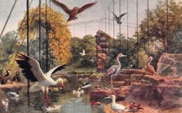 CPA Illustrée - Signée C.T Howard - The Southern Aviary - Other Illustrators