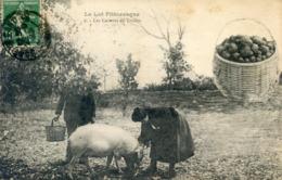 46  LES CAVEURS DE TRUFFES - Francia