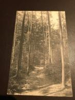 Kluisbergen - Mont De L'Enclus - Orroir - Route De L'Enfer - 1909 - Mont-de-l'Enclus