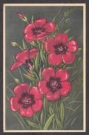 93198/ FLEURS, Lin Rouge - Blumen
