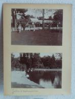 2 Photos Originales Du Jardin D'acclimatation Animaux Africain Zèbres En 1903 - Anciennes (Av. 1900)