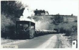 Carte Postale Photographique Bordure Blanche Train De Sprimont - Treni