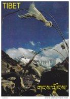 Tibet - Advertising Postcard - Carte Publicitaire ( 2 Scans ) - Tibet