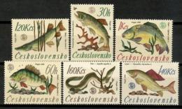 Czechoslovakia 1966 Checoslovaquia  / Fishes WWF MNH Peces Poisson Fische / Cu14829  38-12 - Pesci