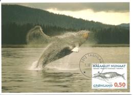 Carte Maximum - Gronland - Groeland - Baleia - Baleine - Whale - Megaptera Novaeangliae - Cartoline Maximum