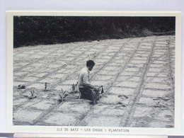 ILE DE BATZ (29) - 07/1987 - PLANTATION DES CHOUX-FLEURS - 150 EX. - ETAT NEUF - Ile-de-Batz
