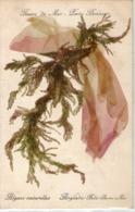 56-belle Ile En Mer-algues Naturelles-anglade Belle Ile En Mer-fleurs De Mer.porte Bonheur - Belle Ile En Mer