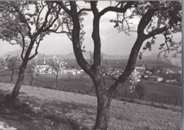 Sossano - Panorama - Vicenza - H5814 - Vicenza