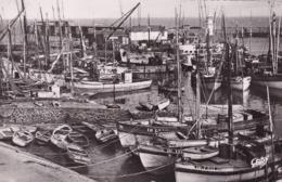 ILE D'YEU - Thoniers Au Port - Ile D'Yeu