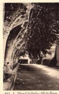 CP 83 Var Château De Ste Roseline Allée Des Platanes 2 BEF - Les Arcs