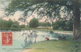 Chevaux à L'abreuvoir - étang De Sologne - Série A La Campagne - 1907 - Coll. Marchand De Et Circulée De Sully N° 1461 - Francia