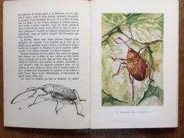 Jean-Henri FABRE : Les Insectes, Peuple Extraordinaire. Delagrave, 1963, Illustré. - Nature