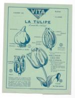 Protége Cahier Vita La Tulipe - Protège-cahiers