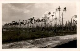 Vetrna Smrst V Lesich Kralovehradeckych 4. 7. 1929 - Tchéquie