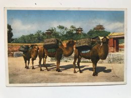 Carte Postale Ancienne (années 30) Coal Hill, Peking - Chine