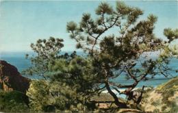 Etats-Unis - California - Torrey Pine Near San Diego - Arbres - Arbre - état - San Diego