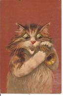 Chat Musicien - Katzen