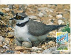 23  MC , Maximumkarten - Enten , Vögel , Birds - Albatrosse & Sturmvögel
