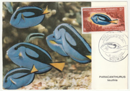 CARTE MAXIMUM - Nouvelle Calédonie - 1965 - Poisson - Cartoline Maximum