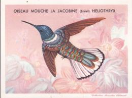 CHROMO - Biscottes Clément - Oiseau Mouche La Jocobine - Brésil - Animali