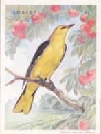 CHROMO - Biscottes Clément - Oiseau - Loriot - Animali