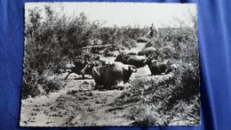 CPSM CHEVAL CHEVAUX EN CAMARGUE 13 TAUREAUX TRAVERSANT UN COURS D EAU ED SL - Horses