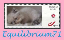 DUOSTAMP** / MYSTAMP** - Chat Persan / Perzische Kat / Persian Cat / Perserkatze - Gatti