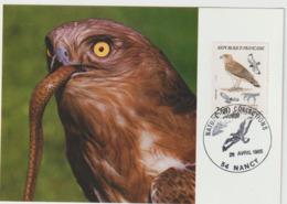 Carte-Maximum FRANCE N° Yvert 2338 (CIRCAETE) Obl Sp Ill Nancy (Ed Terrasse) - 1980-89