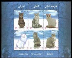 Iran, 2004. Cats - Hauskatzen