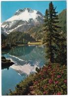 Maloja. Lago Di Cavioccio Mit Mente Del Forno - (Suisse/Schweiz) - GR Grisons
