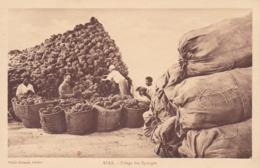 Sfax. Triage Des éponges Rare TBE Non écrite - Tunisia