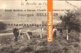 Publicité GEORGES SELLERIN Absinthe Villeneuve-sur-Yonne 89 - Récolte De L'hysope - Scans Recto-verso - Advertising