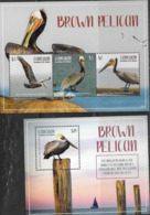 CANOUAN, GRENADINES OF ST. VINCENT, 2019, MNH, 2019, BIRDS, PELICANS, BROWN PELICAN, SHEETLET+ S/SHEET - Pelicans