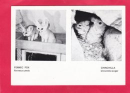 Modern Post Card Of Animals,Fennec Fox,Chinchilla,Jersey Zoo,X27. - Other
