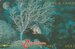 Turks And Caicos Islands - Redband Parrotfish And Coral - 6CTCA - Turks & Caicos (I. Turques Et Caïques)