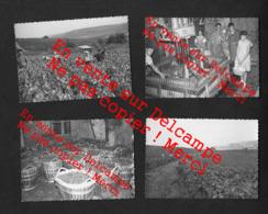 Vendanges 1959 - 8 Photos à étudier 7X10cm Non Situées Mais Certainement En Champagne  - Vignes Pressoir - Beroepen