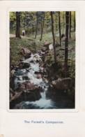 AR75 The Forest's Companion - Stream Through Woods - Trees