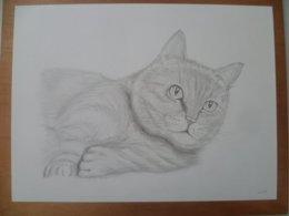 DESSIN ORIGINAL CHAT CAT GATOS - Dessins