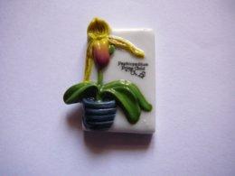 Les Orchidées - Paphiopedilium Prim Child - Sin Clasificación