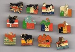 Lot 12 Pin's BONJOUR Dans Les 12 Pays Européens EUROPE Animaux : Coq, Mouton , Taureau, Cheval, Chouette - Sets