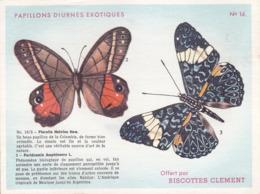 CHROMO - Biscottes Clément - Papillons Diurnes Exotiques - Pierella Helvina Hew - 16 - Animals