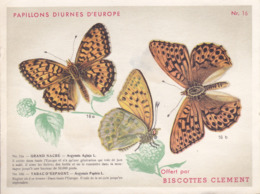 CHROMO - Biscottes Clément - Papillons Diurnes D'europe - Grand Nacre - 16a - Animali