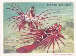 CHROMO - Biscottes Clément - Poisson - Dragon Des Mers - Animali