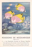 CHROMO - Biscottes Clément - Poisson - Chaetodon Auriga - Mozambique - Publicité Marinol - Laboratoire La Biomarine - Animales