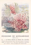 CHROMO - Biscottes Clément - Poisson - Pteroïs Volitans - Mozambique - Publicité Marinol - Laboratoire La Biomarine - Animales