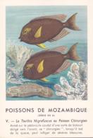 CHROMO - Biscottes Clément - Poisson - Teuthis - Mozambique - Publicité Marinol - Laboratoire La Biomarine - Animales