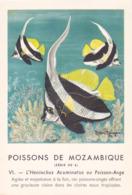 CHROMO - Biscottes Clément - Poisson - Heniochus - Mozambique - Publicité Marinol - Laboratoire La Biomarine - Animales