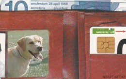 HOLANDA. PERROS. People & Pets, Loyal. 10F. CD 004-01a (115) - Perros