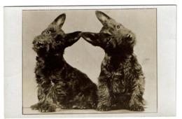 Carte Photo - Studio YLLA Photographe D'animaux - Black Scottish Terriers - 2 Scans - Honden
