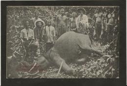 CPA éléphant Chasse Congo Français Non Circulé - Congo Français - Autres